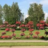 Сигулда, Латвия фото: В.Д. Бардина